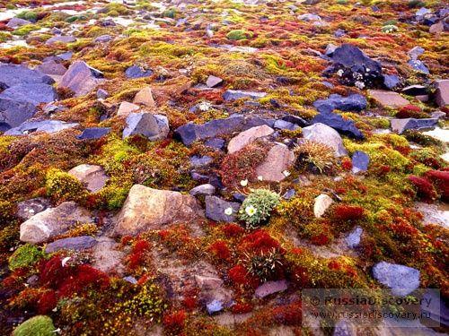 Туры на Северный Полюс 2014, отдых на Севере России, ледокольный круиз