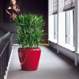 Naordinujte si šesť rastlín do obývačky