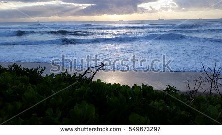 Small bird in South Africa in the early morning with wild ocean waves crashing in
