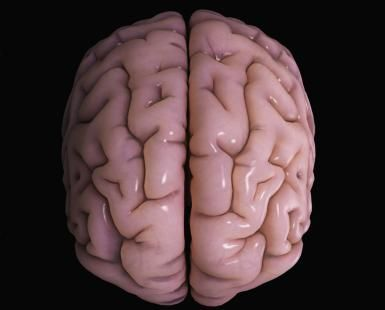 This is s stylized model of a human brain, showing the cerebral cortex and medial longitudinal fissure which separates the two hemispheres