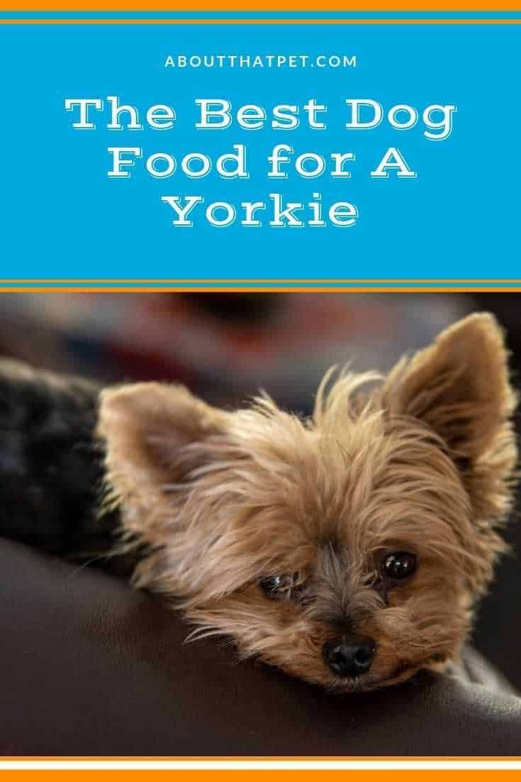 What S The Best Dog Food For A Yorkie In 2020 Best Dog Food Dog Food Recipes Yorkie