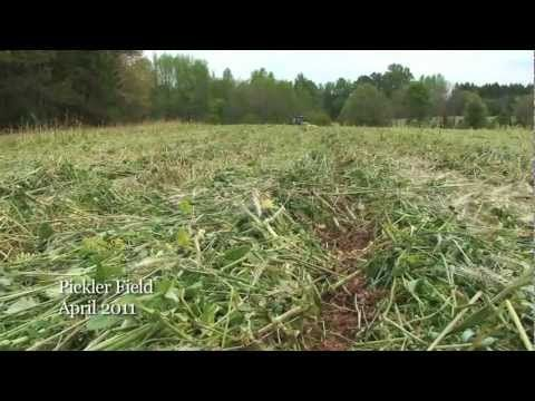 multispecies cover crops and how they were able to re pinteres