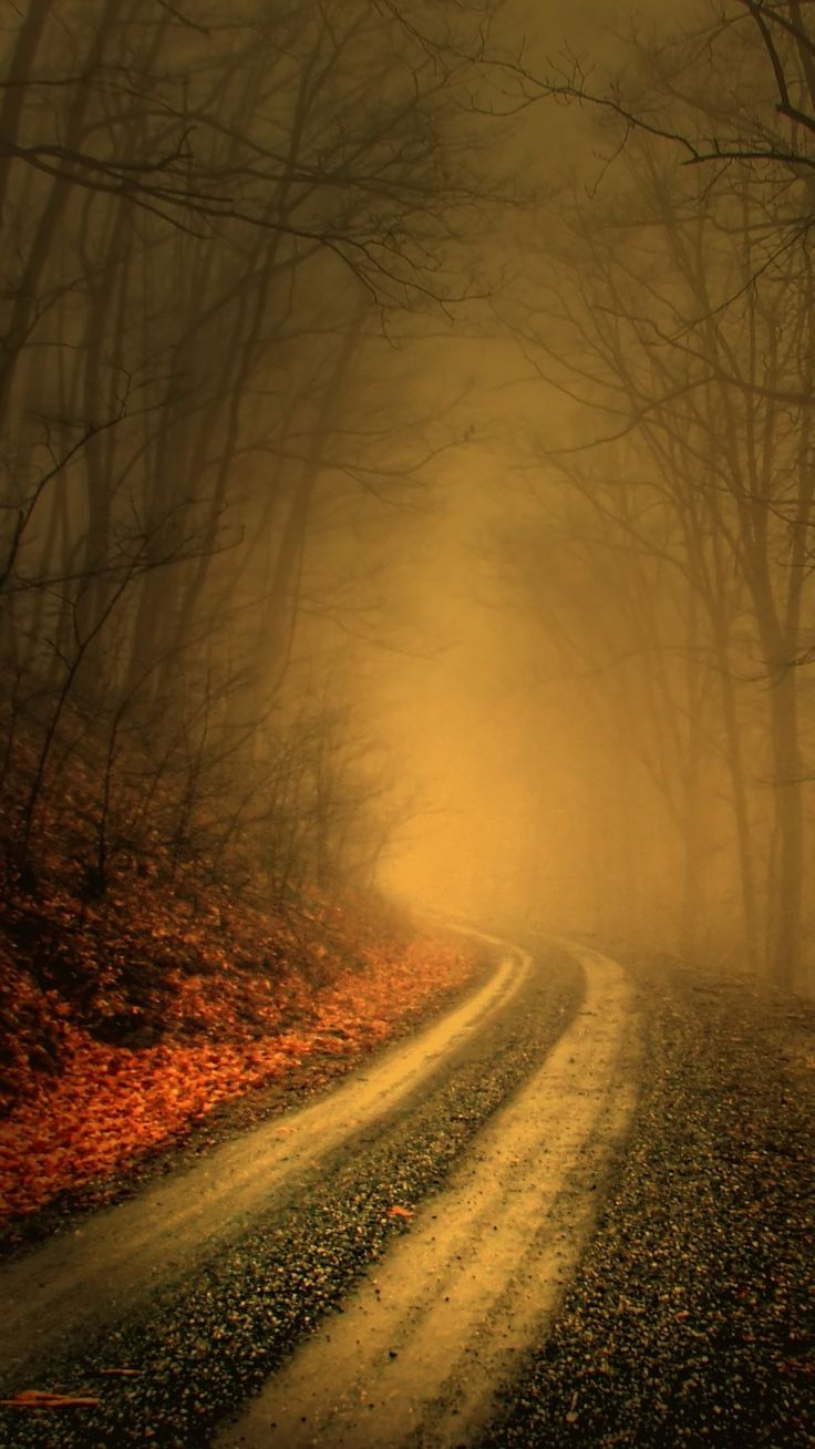Into the fog...if you dare....