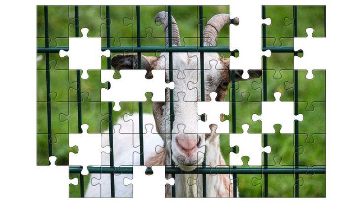 Free Jigsaw Puzzle Online - Goat  #Game #JigsawPuzzle #Puzzle #jigsaw