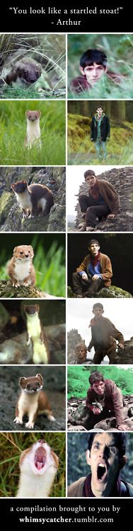 BBC, why do all of you're actors resemble animals? First Sherlock and Watson, now Merlin.
