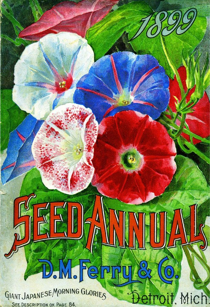 1899 Morning Glories Vintage Flowers Seed Packet Catalogue