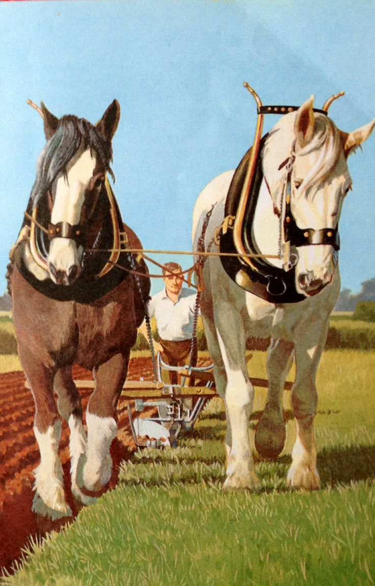 From The Ladybird Book Of Horses