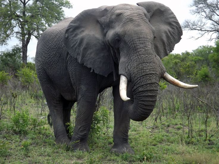 Paul G. Allen Introduces Major Initiative to Conserve African Elephant Population   - http://www.environment.co.za/wildlife-endangered-species/paul-g-allen-introduces-major-initiative-conserve-african-elephant-population.html