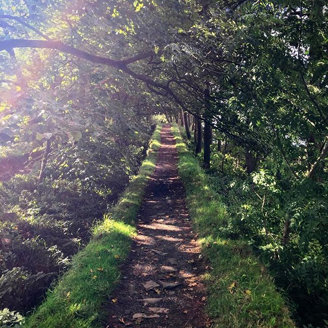 What's the best kind of tunnel? A tree tunnel of course . Find this one at Housesteads Roman Fort on Hadrians wall in beautiful Northumberland