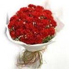 Bold & Red Carnation
