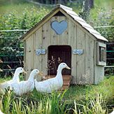 Such a cute house for the ducks! Will have to ask Mike to build it!!!!   Duck and Goose Houses
