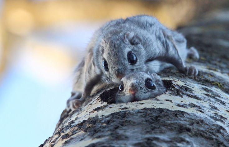 Ari Kuusela - Liito-oravat