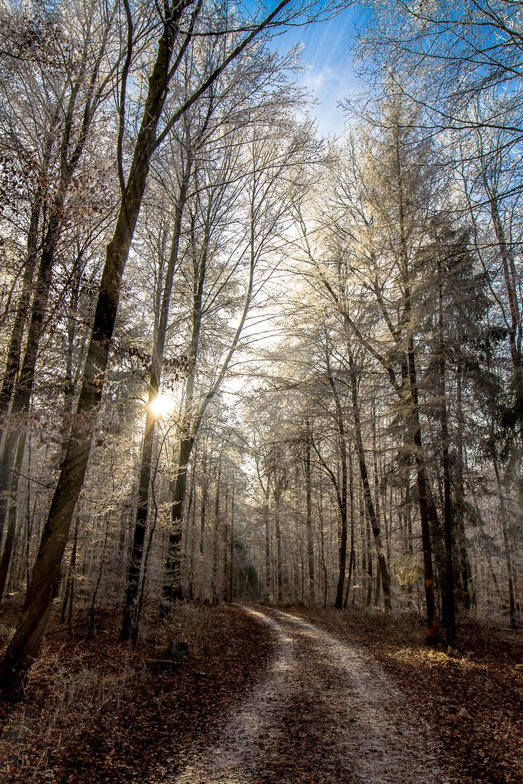 ... a winterway near ulm #2