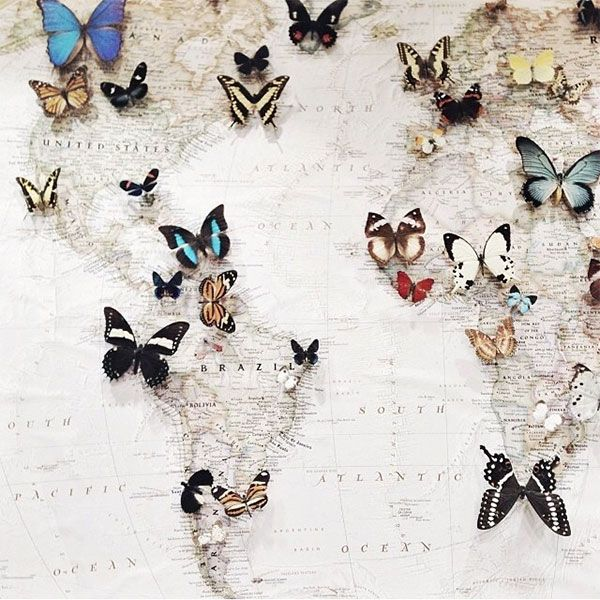 la la loving a world map marked with #butterflies - pinning all the places you've traveled to.  #travel