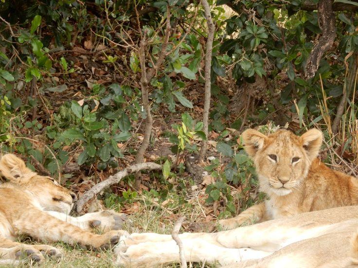 10 Reasons To Visit Magical Kenya | The Tiny Taster
