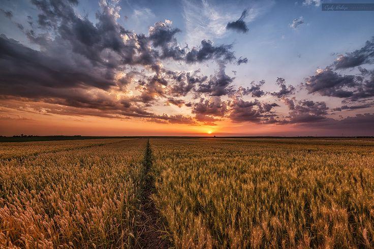 Out in the fields by Czakó Balázs on 500px
