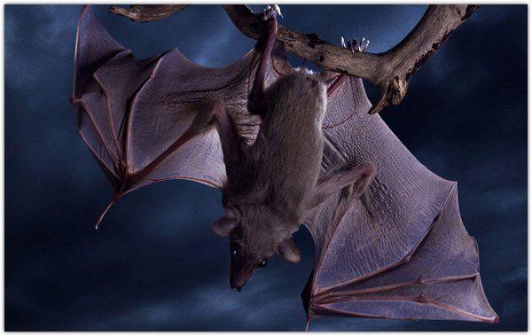 Летучие мыши, невероятные фото : u3poccuu