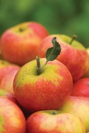 HOW TO; grow an apple tree. How to grow an apple tree Find out about growing your own apples, which varieties to grow and how to plant and care for them
