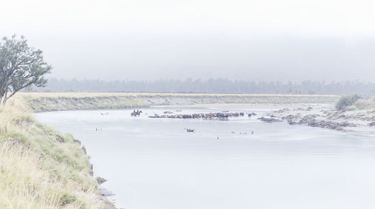 River crossing, west coast, on horse back, drover, NZ Art, Our Land, Dan Max