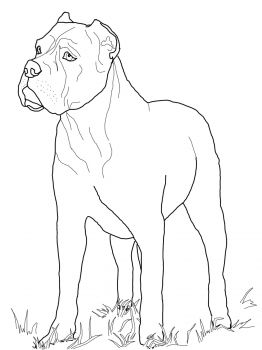 Cane Corso Coloring Page From Dogs Category Select 27237 Printable Crafts Of Cartoons Nature Animals Bible And Many More