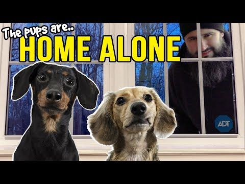 Ep 13 The Dogs Are Home Alone Then Puppy Burglar Arrives