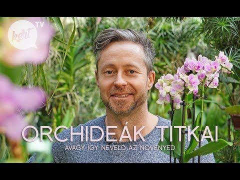 Így neveld az orchideád avagy a virágzás titka - videó - kert.tv
