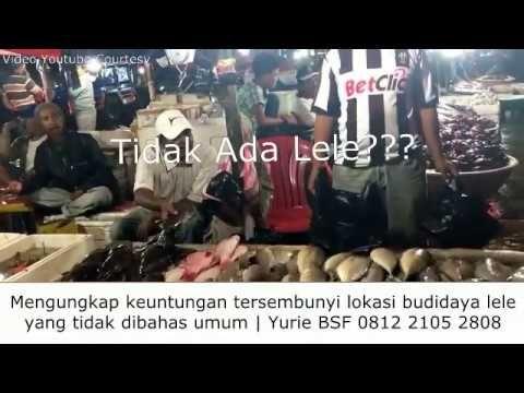 Lokasi Yang Baik Budidaya Ikan Lele - Mengungkap Keuntungan Lokasi Yg Ti...
