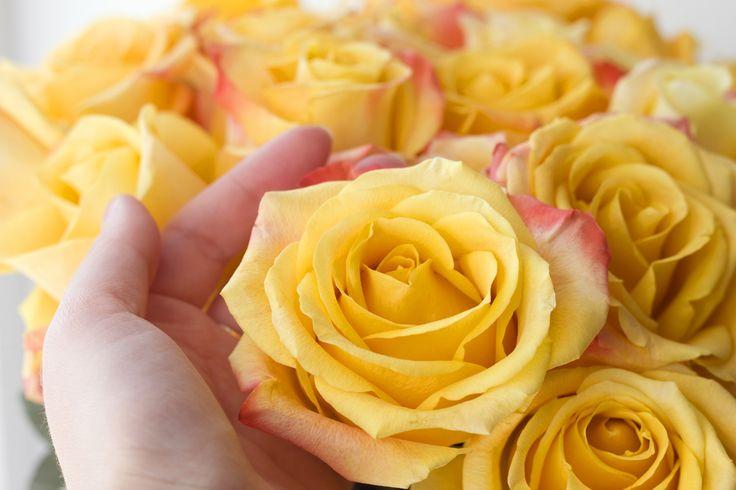 Gelbe Rosen schenken mit Rosengruss.ch - Jetzt Rosen bestellen und Rosen versenden.