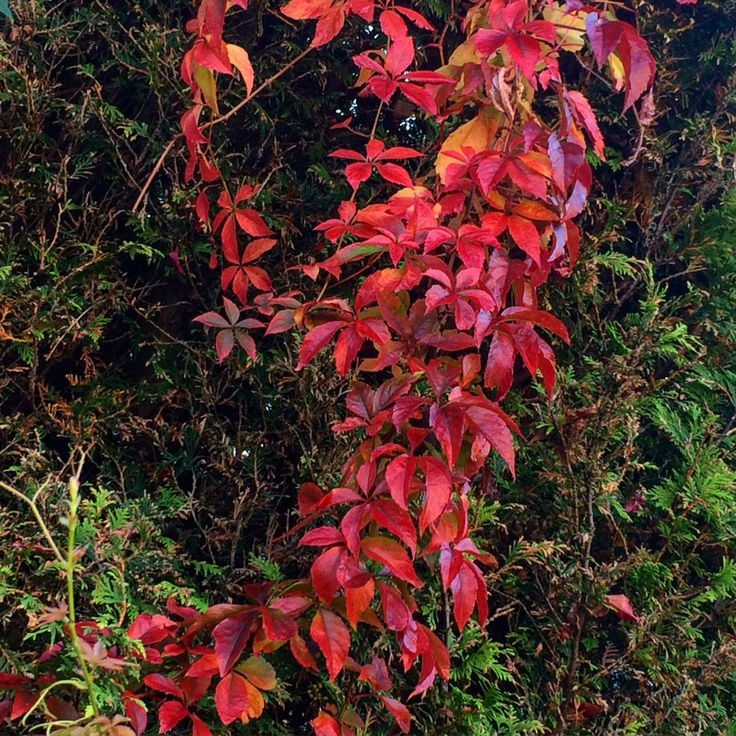 Beautifull fall colors!