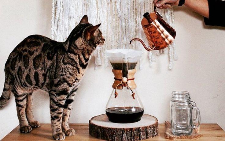 Miez und Filterkaffee
