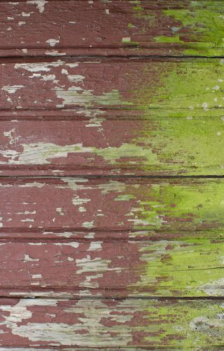 How to remove mold from wood wood paneling how to remove and bobs for Removing mold from exterior wood siding