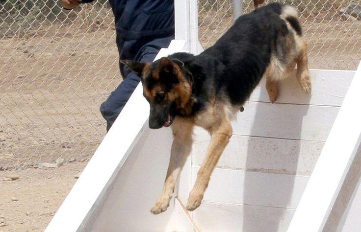 Basic Dog Training - Dog Training - Dog Tips & Advice #dogs #pets #dog #cute #animals #puppy