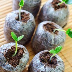 2018 Seed Planting Calendar