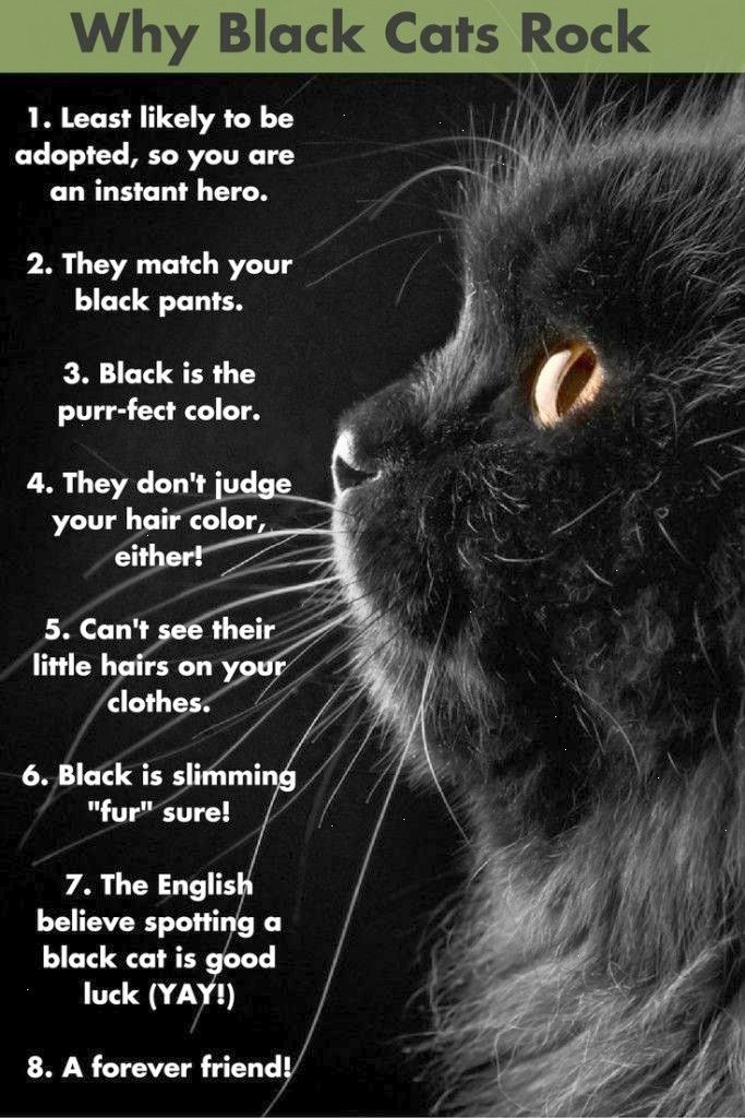 Black Cats Appreciation Day Is Here But Black Cats Are Awesome All Year Round Here Are Some Reasons And Click Black Cat Appreciation Day Black Cats Rock Cats