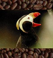 Shade Grown Coffee: Organic, Fair trade, Bird Friendly Coffees - Eartheasy.com Solutions for Sustainable Living