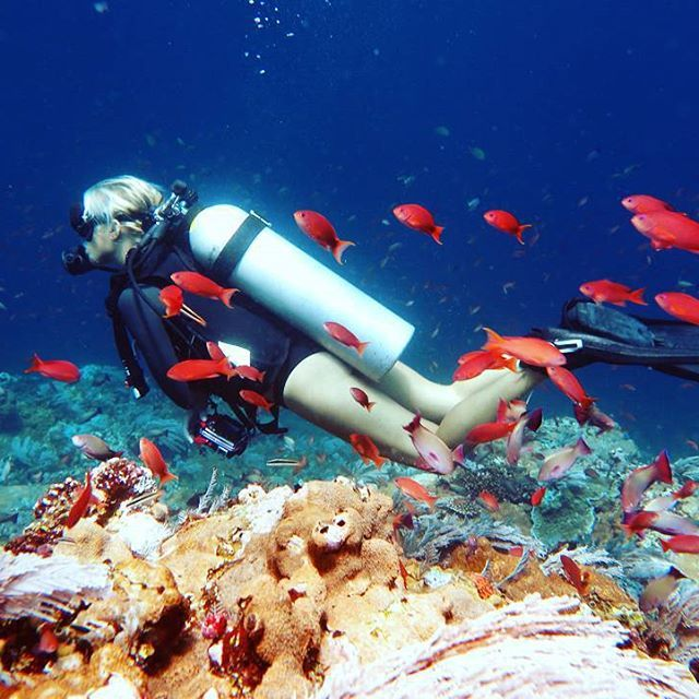 #diving #divecenter #dive #underwater #underwaterphoto #underwaterphotography #bg_underwater #ocean #powershot #wonderfullindonesia #labuanbajo #komodo #flores #beauty_of_nature_ #bestnatureshots #igphotomagic