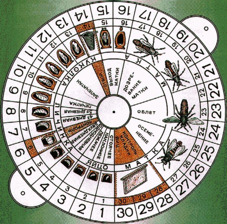 Календарь вывода маток в круге