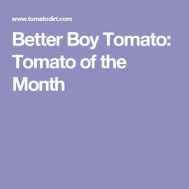 Better Boy Tomato: Tomato of the Month