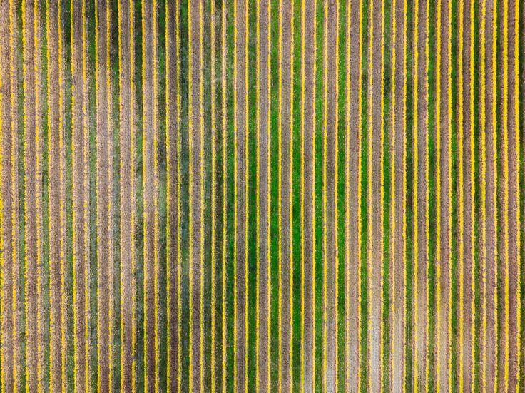 "227 mentions J'aime, 7 commentaires - DEFTOM (@deftom_filmaker) sur Instagram: ""Above Vineyards . . . . #dronegear #aerialphotography #gofly #godive #drone #dji #mavicpro…"""