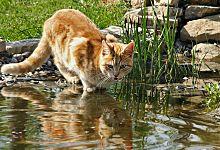 17 id es propos de pipi de chat sur pinterest urine de chat dissolvant urine de chat et - Comment enlever l odeur de pipi de chat ...
