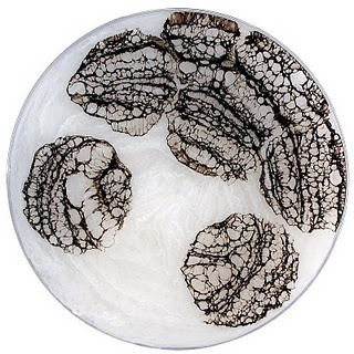 Painting in a Petri Dish from the series 'The Daily Dish 2009' by Klari Reis