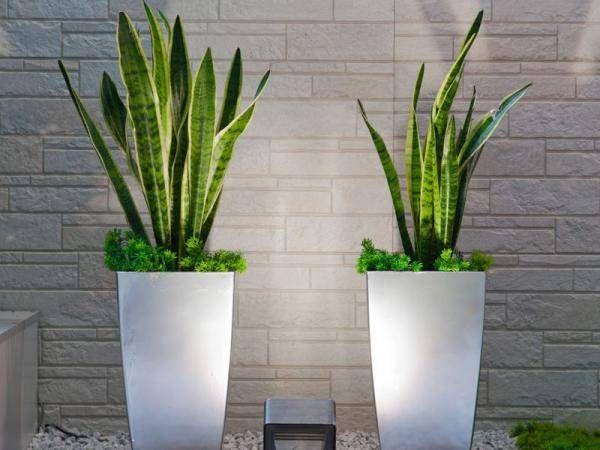 Hit 6 Roslin Doniczkowych Ktore Oczyszczaja Powietrze Outdoor Flowers Plants Garden Art