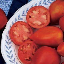 Amish Paste Tomato | Heirloom - Open Pollinated Tomato Seeds | Medium-Large Tomato Seeds | Tomato Seeds | Totally Tomatoes