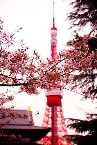 """Sakura Tokyo Tower: Minato, Tokyo, Japan."