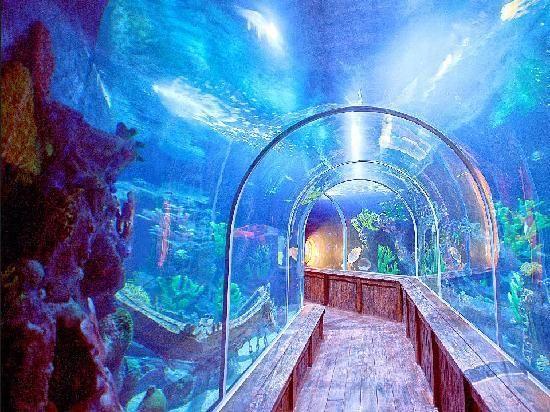 Tunel de Tiburones. santo domingo. aquarium.