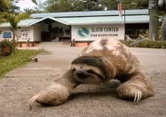 gif sloth