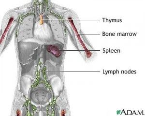 Multiple Myeloma information update