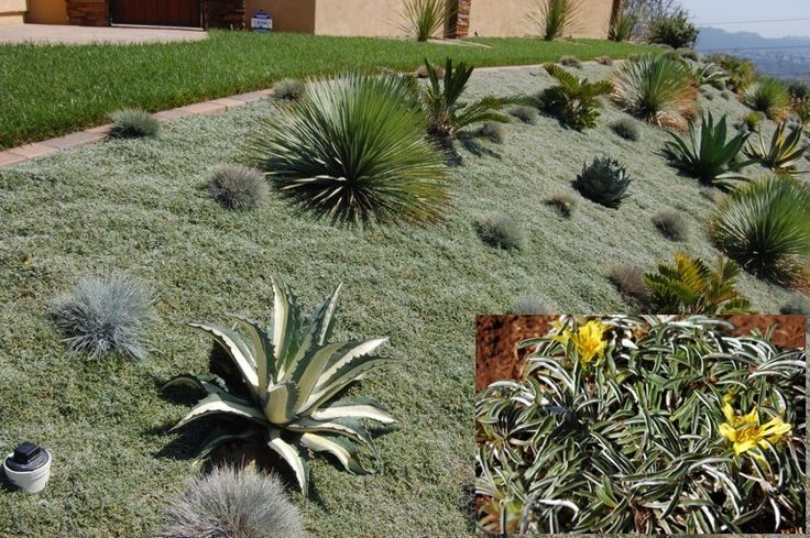 189 best desert landscaping images on pinterest for Hillside landscaping plants