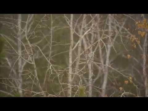 """Короткометражный фильм """"Личный пример"""", подготовлен для творческого конкурса """"Мы за Нравственность!"""" """"Командой Южного Урала"""" из Челябинской области."""