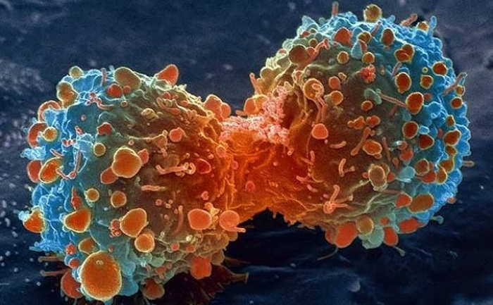 Universal cancer vaccine is on the horizon, after scientists managed to rewire immune cells to fight any type of disease.Researchers at Johannes Gutenberg University of Mainz in Germany, developed a potential new therapy, by injecting tiny particles of